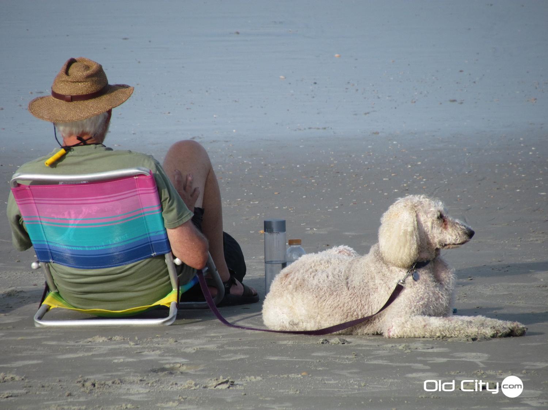 Dog Friendly Hotels Crescent Beach Fl