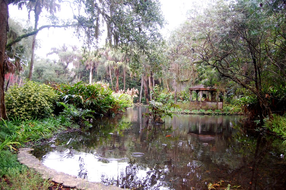 Image contains the a small pond surrounded with trees, brush, plants, and flowers.