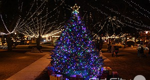 NOLChristmasTree