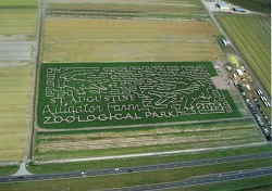 Corn Maze at Sykes and Cooper Farms