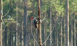 Woodpecker at Faver-Dykes