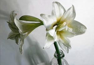 amaryllis-and-milk-bottleSusanOber