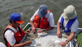 fishcaughtforreseach