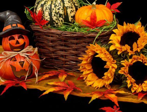 Fall Season Brings Festivals to St. Augustine