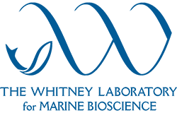 Whitney Laboratory Logo