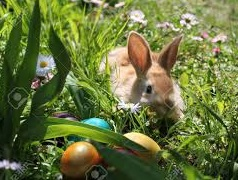 Easter Egg Hunt, Brunch, & More