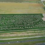 Fall Corn-Maze