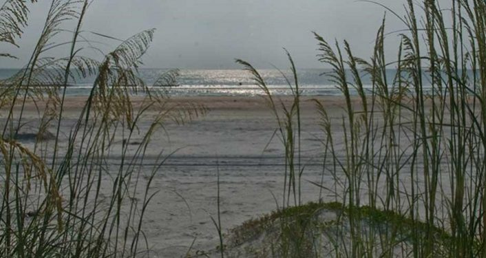 Anastasia State Park Seaoats and Dunes by Robert Vazquez