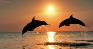 Image of 2 dolphins jumping out of water with sunset in the background