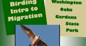 Birding Intro to Migration with Park Ranger Joe at Washington Oaks