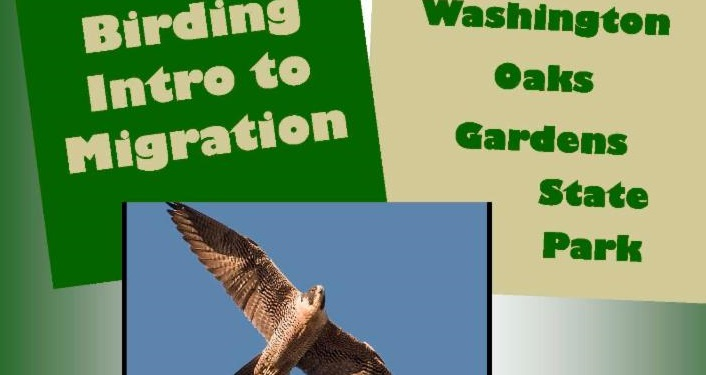 Birding Intro to Migration with Park Ranger Joe at Washington Oaks