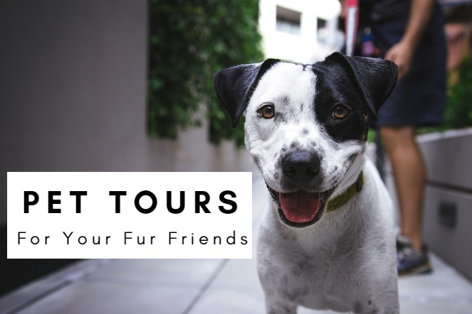 St. Augustine Pet Tours