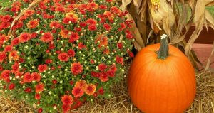 Come to the Annual Fall Festival and Chili Cook-off at Shores UMC
