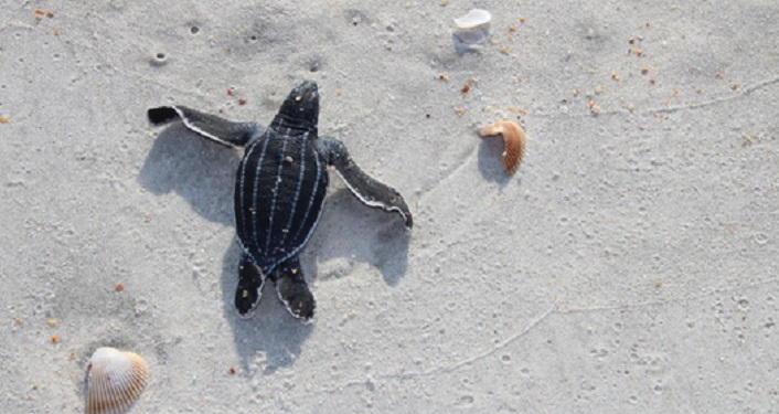 Learn about sea turtles at the Afternoon Insight Lecture