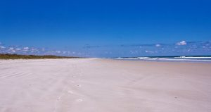 During Environmental Clean Up, help clean up the beach at Anastasia State Park.