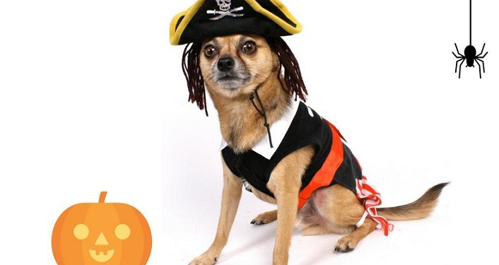 Bring your four-legged friends and join us for Howl-O-Ween Walk, a family-friendly fun run