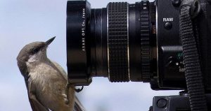 Image of small bird perched on camera photo lens, Park Photo Scavenger Hunt