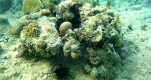 Tthe long-spined sea urchin is discussed in December's Evenings at Whitney Program