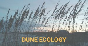 learn what makes our dunes important habitats and why we should protect them.