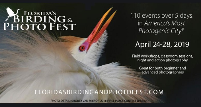 Text about Florida's Birding & Photo Fest 2019 with an image of a whtie bird with orangish-red beak.
