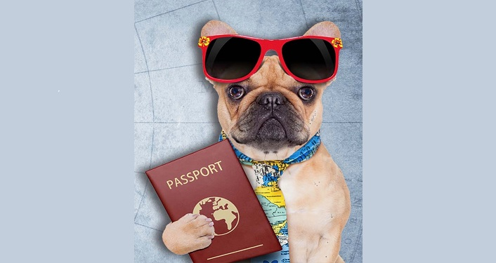 image of dog holding passport, with red sunglasses propped on its' head and tie around its' neck.