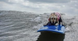 dog on a surfboard on the ocean