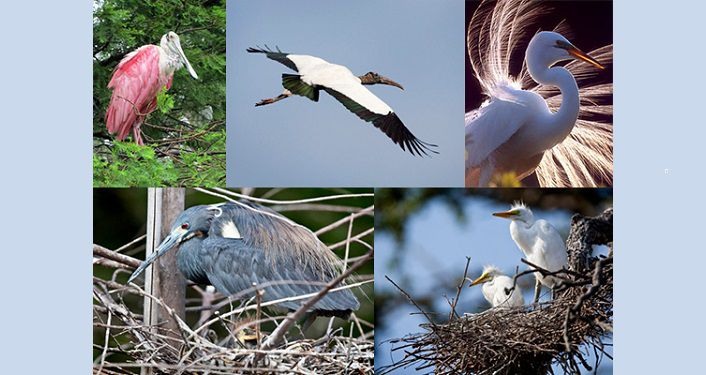 Images of several birds that can be seen at the Alligator Farm during Dine on the Wildside