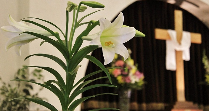 image of Easter Lily in a church, draped cross in the background
