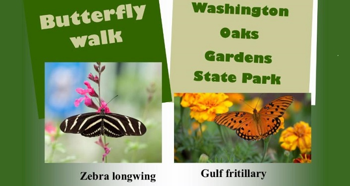 "text ""Butterfly Walk at Washington Oaks Gardens State Park"" along with image of Zebra longwing and Gulf Fritillaryry"