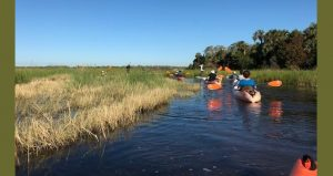 Kayakers going through the marsh on Guided Kayak Exploration