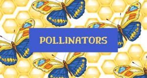 caricature image of butterflies with text Pollinators