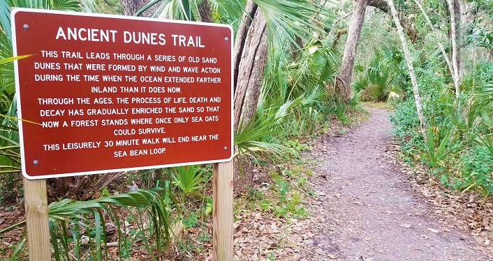 image of sign entitled Ancient Dunes Trail placed at beginning of trail in Anastasia State Park. Sign is maroon red with white lettering.