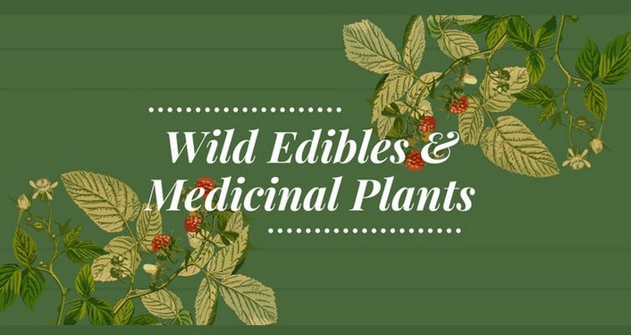 text in white on green background; Wild Edibles & Medicinal Plants. Image in bottom left and top right of green leaves and red berries