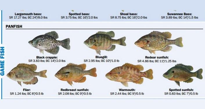 images of freshwater fish, taught what kind they are during Freshwater Fishing 101