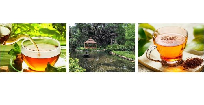 Image contains mindfulness and tea at washington oaks.