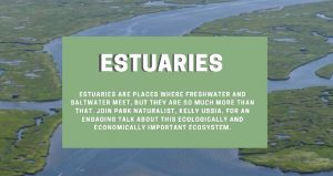 photo of esturary with text over it; Estuaries ~ An Educational Talk
