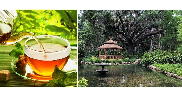 left side - tea being poured into a glass cup; right side - image of gazebo at Washington Oaks