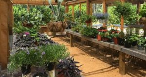 All sorts of plants for sale at Washington Oaks during Second Saturday Plant Sale