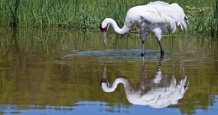image of crane at water's edge, reflection in the water; Favre-Dykes