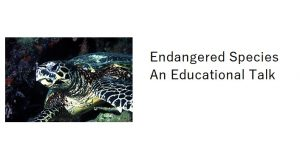 image of Everglades Loggerhead Turtle with text;p Endangered Species - An Educational Talk