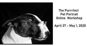 The Purrrfect Pet Portrait Online Workshop; image of dog with spectacles on