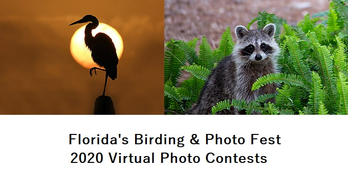 image on left crane silhoutted in sunrise; image to right is a raccoon, Florida's Birding & Photo Fest Virtual Photo Contests