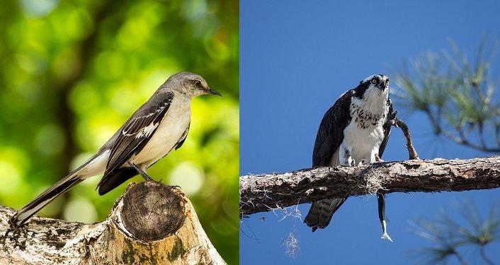 Learning Bird Language