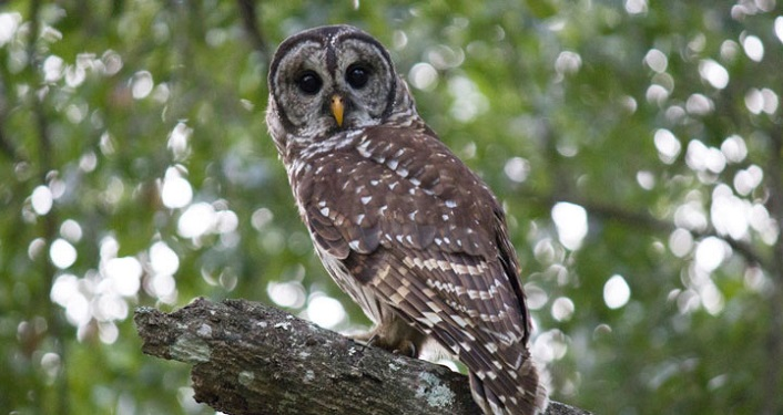 Owl Prowl at Canopy Shores