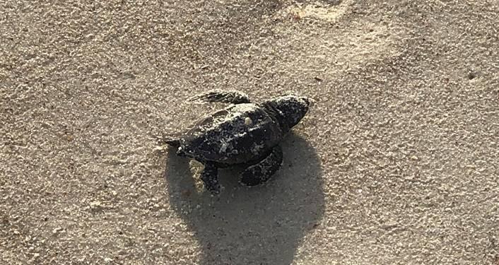Sea Turtle Talk at Anastasia